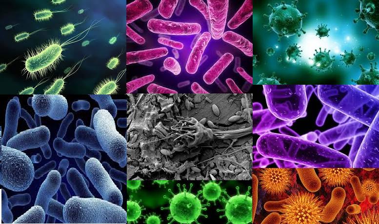 bacterii cromogene
